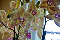 Day 354: Orchids
